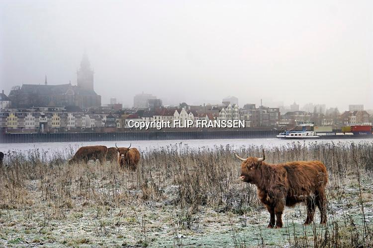 Nederland, Nijmegen, 31-1-2019 Wilde runderen grazen op het Lentereiland, Veur Lent in de ochtendmist na een koude nacht. Het eiland is ontstaan door de aanleg van de nevengeul tegenover de stad. Natuurbegrazing door het uitzetten van Schotse Hooglanders. De grazers lopen op de oever en houden de begroeing laag en divers. Ze zijn uitgezet door de stichting Taurus die zich ook bezighoudt met het terugfokken van het Europese oerrund, de oerkoe. Op de achtergrond vaart een binnenvaartschip, containerschip, langs de waalkade van de stad.Foto: Flip Franssen