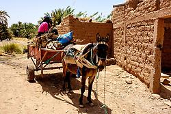 A donkey and cart working near Kasbah Ramala in southern Morocco<br /> <br /> (c) Andrew Wilson | Edinburgh Elite media