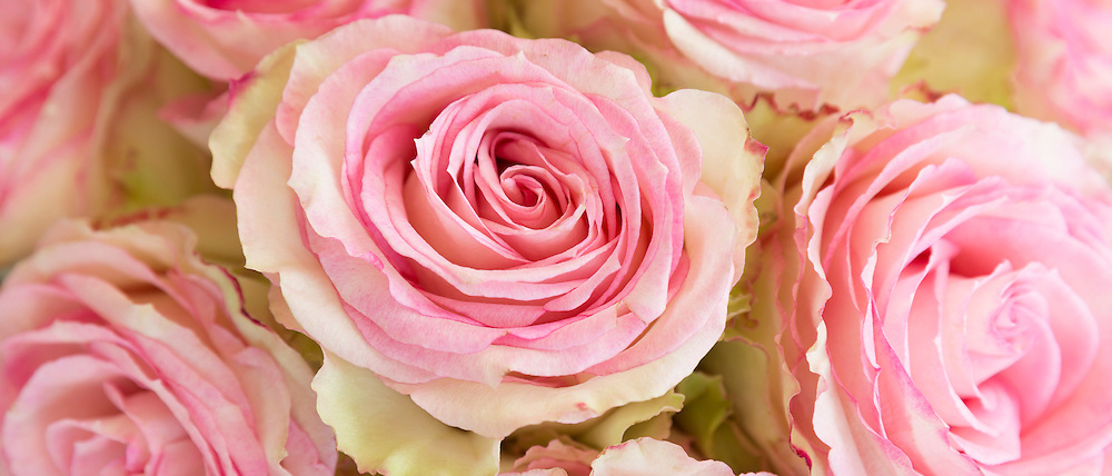 Lace-edged pastel pink roses in an elegant bouquet