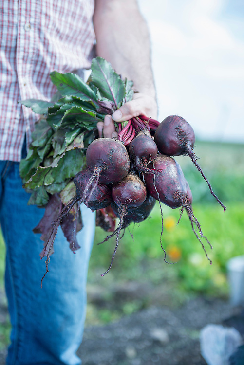 Close-up man hand beetroot holding jeans