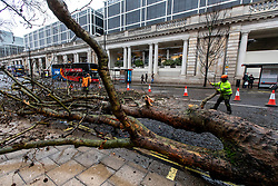 © Licensed to London News Pictures. 09/02/2020. London, UK. As Storm Ciara hits London, workmen clear up a tree that came down in high winds in Buckingham Palace Road opposite Victoria station. All 8 Royal Parks and the London Eye have closed their gates to the public due to Storm Ciara as weather experts predict further stormy weather with very high winds and heavy rain for Sunday. Photo credit: Alex Lentati/LNP
