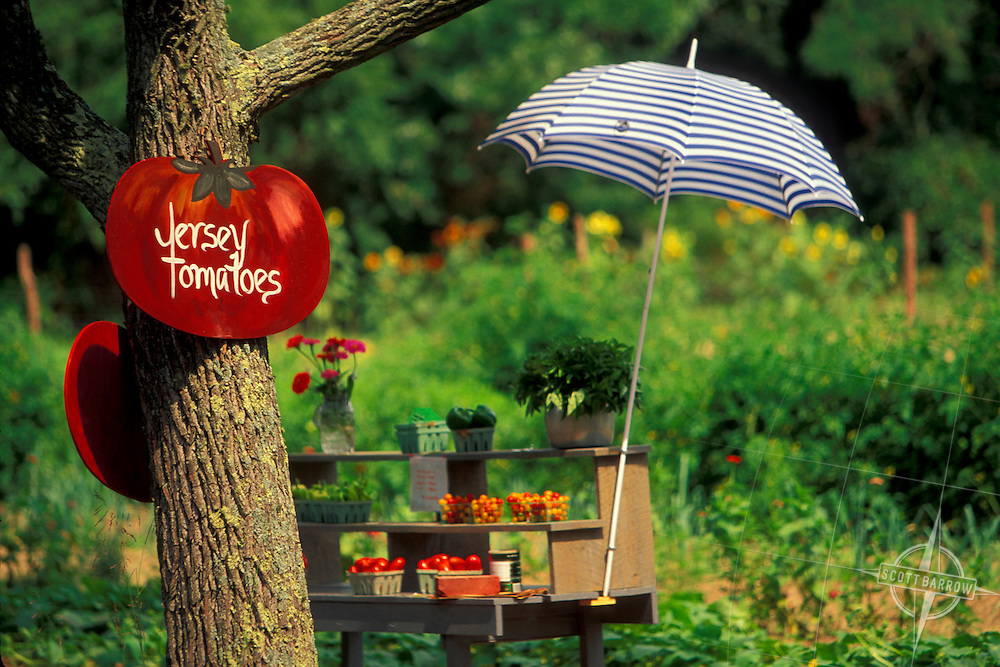 Tomato Stand, Jersey Tomatoes
