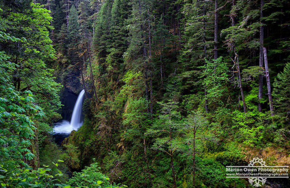 Metlako Falls, 101-foot punchbowl form waterfall on Eagle Creek in the Columbia River Gorge National Scenic Area in Hood River County, Oregon, spring. Named for Metlako, the Indian goddess of salmon.