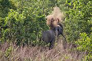 Ghana, National Park.