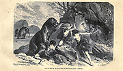 Great Bear and mammoth epoch, according to the French illustrator Emile Bayard (1837-1891), illustration Artwork published in Primitive Man by Louis Figuier (1819-1894), Published in London by Chapman and Hall 193 Piccadilly in 1870