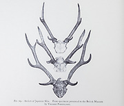 The sika deer (Cervus nippon), also known as the spotted deer or the Japanese deer, is a species of deer native to much of East Asia and introduced to other parts of the world. from the book ' The deer of all lands : a history of the family Cervidae, living and extinct ' by Richard Lydekker, Published in London by Ward 1898