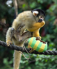 ZSL London Zoo Easter 18th April 2019