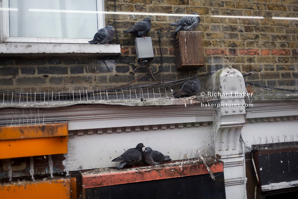 Seen from a London bus, resting pigeons sit on spike-free ledges, on 6th December 2017, in London England.