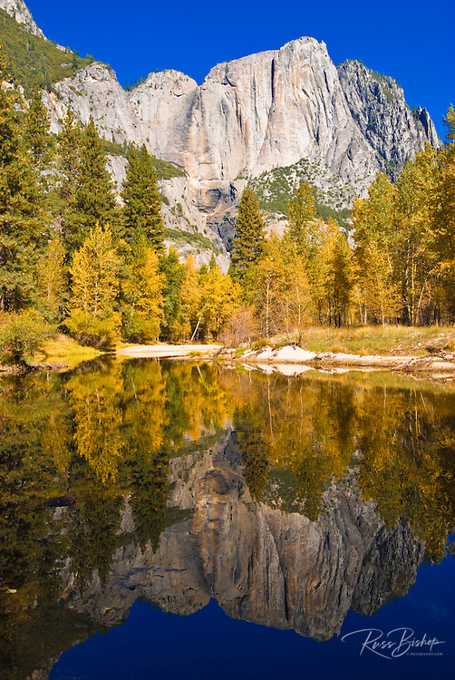 Yosemite Falls and fall color from the Merced River, Yosemite National Park, California