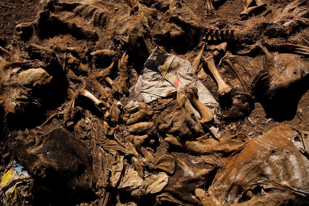 Lagoa Dourada_MG, Brasil...Restos de animais mortos na beira da estrada BR 383 em Lagoa Dourada, Minas Gerais...Remains of dead animals along the highway BR 383 in Lagoa Dourada, Minas Gerais...Foto: LEO DRUMOND / NITRO