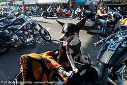 Downtown Sturgis on the final Saturday of the annual Black Hills Motorcycle Rally.  SD, USA.  August 13, 2016.  Photography ©2016 Michael Lichter.