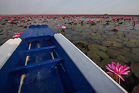 """Red Lotus Lake Kumphawapi near Udon Thani is a special lake officially called Nong Han Kumphawapi though Thai locals call it Talay Bua Daeng meaning:  """"Sea of Red Lotuses"""".  From November through March, the lake sprouts millions of pink lotus blossoms. The perfect time to see them is in the early morning when the flowers open up. Though the lake may appear to be vast, and is often called  the """"red lotus sea"""" this freshwater lake is very shallow, with an average depth of only one meter.  Local villagers trace the origins of the lake to a tragic love myth, adding to the local color.  Visitors appreciate the vibrant, lotus blossoms which are really more pink than red, never mind the name.  Many Asians including Thais eat lotus blossoms."""