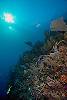 Healthy Cuban Reef