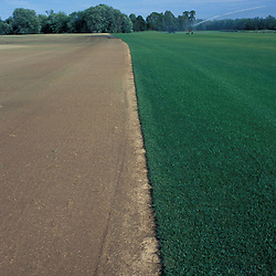 Canterbury, NH.Irrigating a sod field. Gold Star Farm, Canterbury, New Hampshire.  The left side of the field was recently harvested.