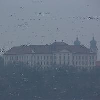 Tens of thousands of wild geese gather before leaving Europe for their winter migration starting from Old lake in Tata (about 67 km North-West of capital city Budapest), Hungary on November 23, 2012. ATTILA VOLGYI