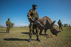 Corporal Simon Irungu, and his platoon of armed Kenyan guards watch over Sudan, one of the last four Northern White Rhinos brought from a zoo in the Czech Republic to Ol Pejeta Nature Conservancy in Kenya in a last ditch effort to breed the almost extinct species of rhino. (Photo by Ami Vitale)