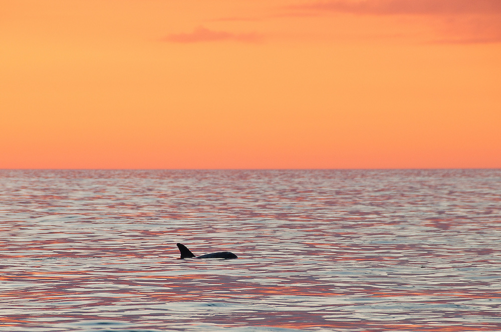 Sunset Swim<br /> Naples, Florida