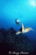 "diver and green sea turtle, Chelonia mydas, ""Hale o Honu"", Kauai, Hawaii, USA ( Central Pacific Ocean ) MR 290"
