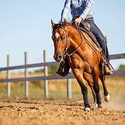 20160905 Quarter Horse Casting