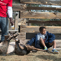 Solaris Collymore helps his father Kern Collymore catch a goat to butcher Saturday in Lupton and bring to the protestors camped out at the Standing Rock Sioux reservation in North Dakota.
