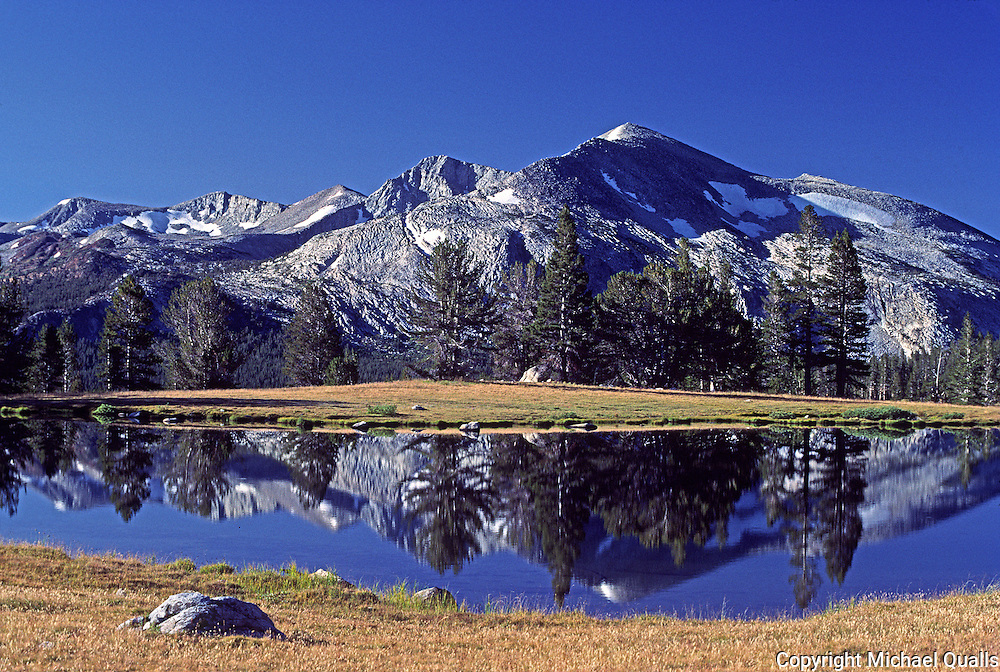 Mt. May reflected in a pool at Dana Meadows.  Yosemite, NP.  USA.