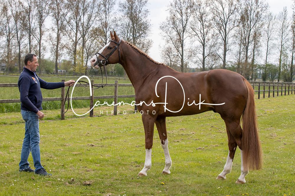 Ermitage kalone, Van Dijck Joris<br /> BWP Young Stallion award 2020<br /> © Hippo Foto - Dirk Caremans<br /> 03/05/2021
