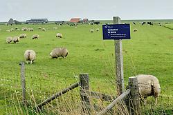 Eendenkooi bij Spang, De Waal, Texel, Netherlands
