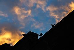 Birds on a wire in Deep Ellum neighborhood of Dallas, Texas, USA