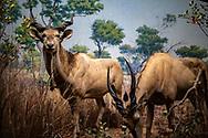 NEW YORK  2020V10<br /> Utställningar på Naturhistoriska museet i New York.<br /> <br /> Foto: Per Danielsson/Projekt.P