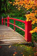 Footbridge across pond surrounded by maples in fall color, at Kubota Japanese Gardens, Seattle, Washington