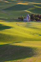 Farm set amidst the rolling hills of green wheat fields in the Palouse region of the Inland Empire of Washington