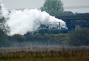 UK, Doncaster - Wednesday, April 15, 2009: View from Potteric Carr nature reserve of the Tornado, a Peppercorn class A1 Pacific steam locomotive, passing under the M18 road bridge, in the direction of London...(Image by Peter Horrell / http://peterhorrell.com)