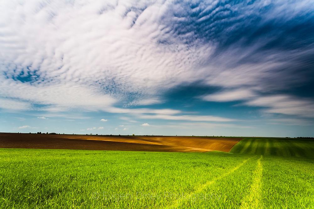 Spring field in Dobrudzha