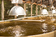 Whisky Creek Shellfish Hatchery