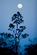 Nova Lima_MG, Brasil. ..Estacao Ecologica de Fechos, localizada no municipio mineiro de Nova Lima, Minas Gerais...The Fechos Ecological Station in Nova Lima, Minas Gerais...Foto: BRUNO MAGALHAES / NITRO...
