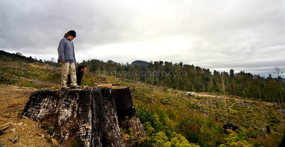 """Near the Florentine Forest in Tasmania, forest activists Wendy and Nish survey a two year old clearcut. Mount Wedge is peeping up from the forests. Forestry Tasmania and contracted companies cut these forests for wood pulp, then burn the leftovers, drops 1080 poison to kill the wildlife. Plantation forest or """"native forest is then grown its place. Activists in Tasmania maintain that the government's forestry policy is destroying the environment and that 90% of Tasmania's old growth forest is already gone."""