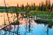 Wetland in boreal forest<br /> Wood Buffalo National Park<br /> Alberta<br /> Canada