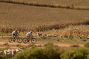 Nino Schurter and Philip Buys of Team SCOTT-Odlo MTB racing pass sheep and a field of maize during stage 3 of the 2014 Absa Cape Epic Mountain Bike stage race held from Arabella Wines in Robertson to The Oaks Estate in Greyton, South Africa on the 26 March 2014<br /> <br /> Photo by Greg Beadle/Cape Epic/SPORTZPICS