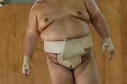 The heavily built torso of Masato Takeuchi, a member of the Professional Sumo Team (Musahigawa Beya) during pre-tournament  practice in Nagoya, Japan. (From the book What I Eat: Around the World in 80 Diets.)   He is 29 years of age; 6 feet, 2 inches tall; and 400 pounds. MODEL RELEASED.