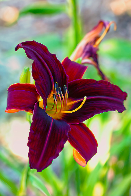 A Deep Maroon Electric Lily From The Garden