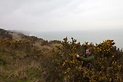 Fergus Drennan picks Gorse at Bishopstone near Herne Bay, Kent, UK.Fergus Drennan , known as 'Fergus the Forager' is a chef, wild food experimentalist and educator.