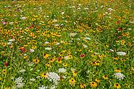 Three Ponds Farm, 939 Scuttle Hole Road, Bridgehampton, Long Island, New York