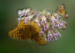 Visions of Monarch Butterflies Adorn tiny floral blooms against a backdrop of greeen