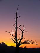 Sunrise orange light silhouettes a bare tree in Bryce National Park, Utah, USA