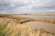 Mudflats and saltings vegetation on the tidal Butley Creek rivers, Suffolk, England