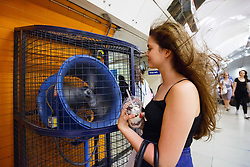 © Licensed to London News Pictures. 20/07/2016. London, UK. A tube passenger cool herself down with help of a big portable fan between platforms whilst traveling on the tube in central London when temperatures hit 27C degrees across the capital on Wednesday, 20 July 2016. Photo credit: Tolga Akmen/LNP