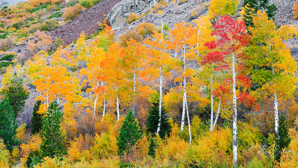 Fall color in Lundy Canyon, Inyo National Forest, Sierra Nevada Mountains, California USA