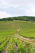 vineyard beaujolais burgundy france