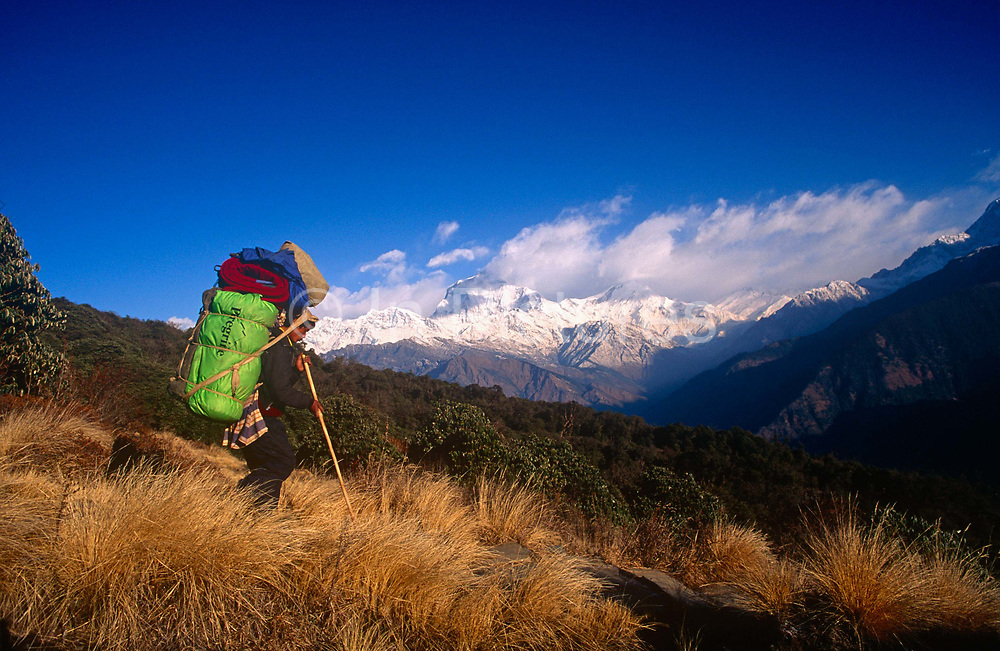 A local man carries tourism industry supplies downhill on the Annapurna Sanctuary trekking route in central Nepal. With the heavy load on his back, supported in the traditional Himalayan manner of a head strap that steadies the pack, the man makes his steady way down the foothill using a long pole for extra balance. Communities here partly-depend on the agriculture of rice-growing but also on the passing tourist trade. Western trekkers from all over the world walk through these tiny communities on their way up the series of climbing trails of the Annapurna Conservation Sanctuary circuit, a sometimes rigorous walk from the low hills of Pokhara to the higher altitudes of Annapurna, the (26,000 feet (8,000 metre) peak. To be greeted by so much choice is the most rewarding experience and the offer of hot showers is about the best reward for so much exertion.