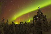 Auroral band over the Finnish forest near Inari, with a bright green spike.